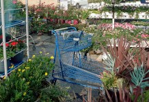 blue shopping cart in garden