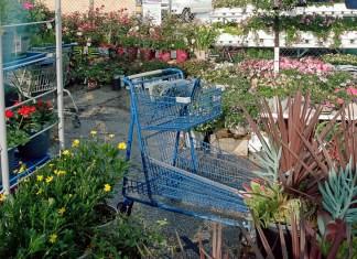 blue shopping cart in garden