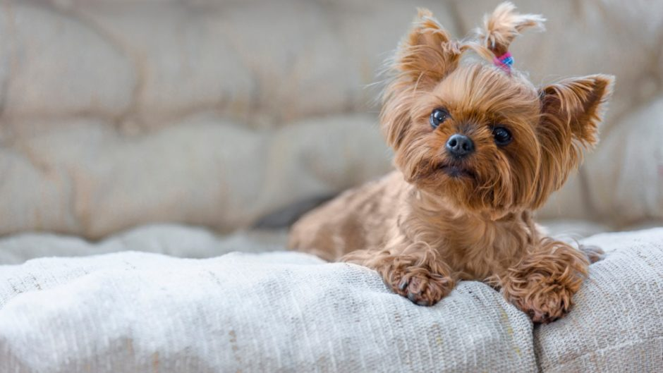 7 Best Dog Toys For Small Dog Breeds