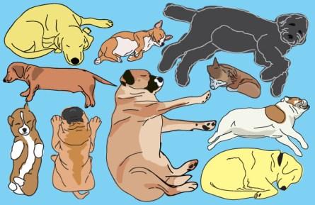 Illustration showing different dog sleep position.