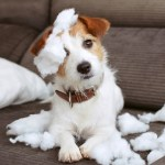 New Puppy Tips 8 Mistakes New Puppy Parents Make
