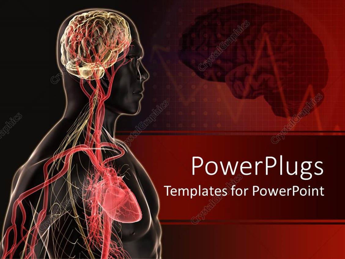 Powerpoint Template Human Body Anatomy With Brain Blood