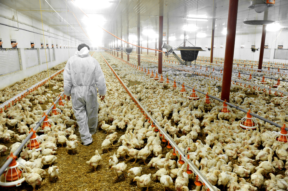 The Case Against Factory Farming