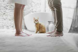 Picture of a Cat and People for Real Estate News for Investor Podcast Episode #797