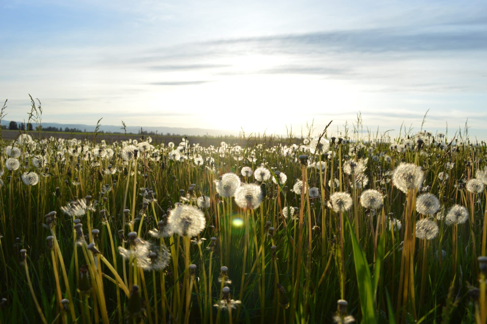 picture of dandelions for Real Wealth Show Podcast Episode #629