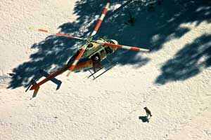 Project personnel attempt to dart and capture a Mexican wolf during the helicopter operation