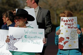 shley Ivins, a rancher from Lincoln County, holds a sign showing opposition to Mexican gray wolf releases during a rally at the state Capitol on Wednesday. About 40 people, mostly ranchers and their families, showed up to support a state ban on Mexican wolf releases, while about 150 people showed up to ask the governor to lift the ban.