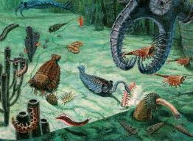 Paleozoic quotTime of New Lifequot timeline Timetoast timelines