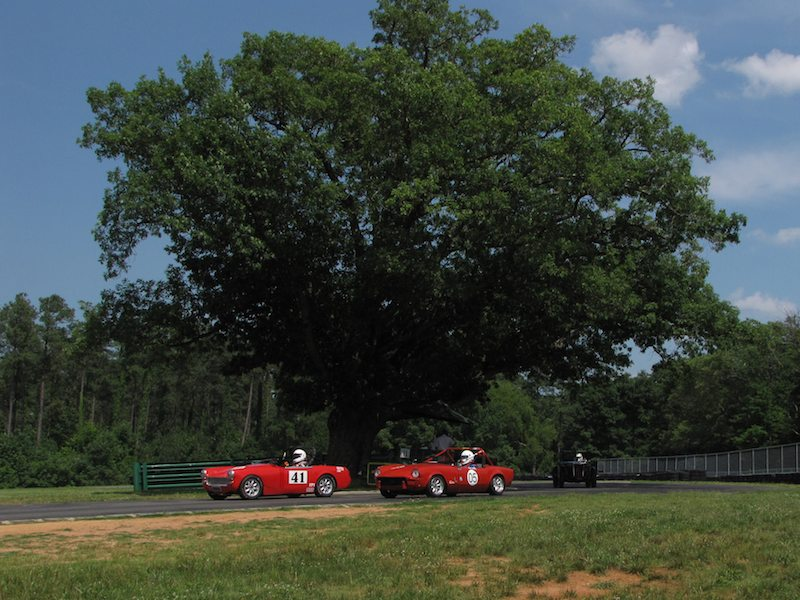 Oak Tree at VIR