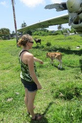 Me unsuccessfully trying to lure the cows