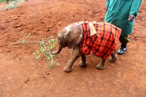 This little cutie was the youngest orphan, only 3 weeks old.