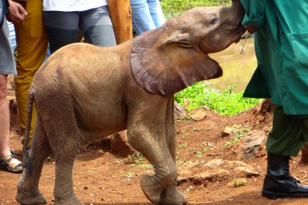 Cutest little baby elephant