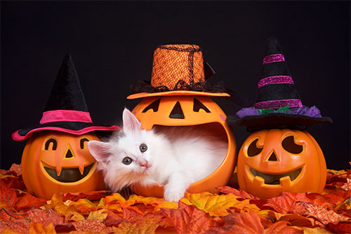 Why To Avoid Your Cat Wearing A Mask On Halloween