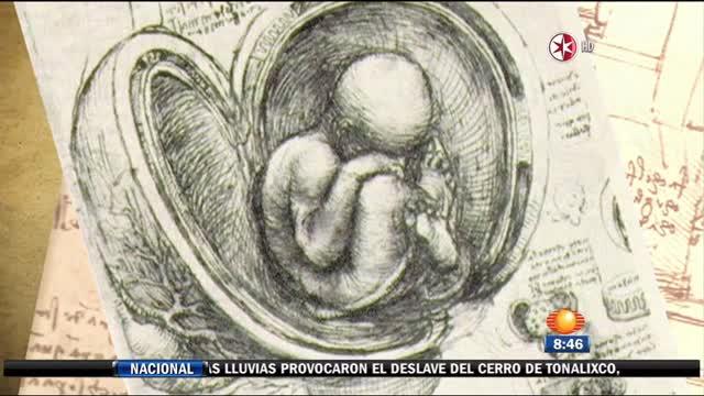 El esplendor de Da Vinci en Bellas Artes
