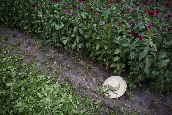 sombrero de campesino en sembradío