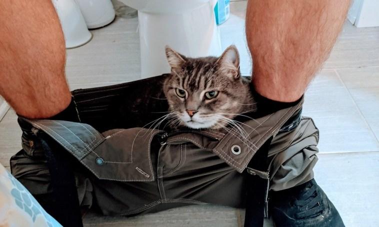 gato acompañando al baño