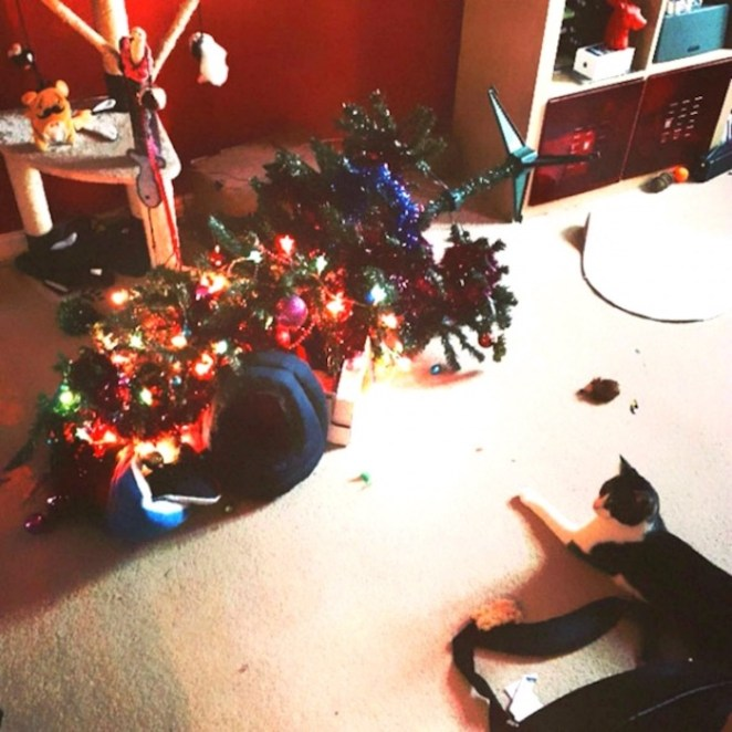 travesuras de gatos en navidad - gato destruyendo árbol de navidad