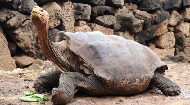 tortuga que salvo a su especie