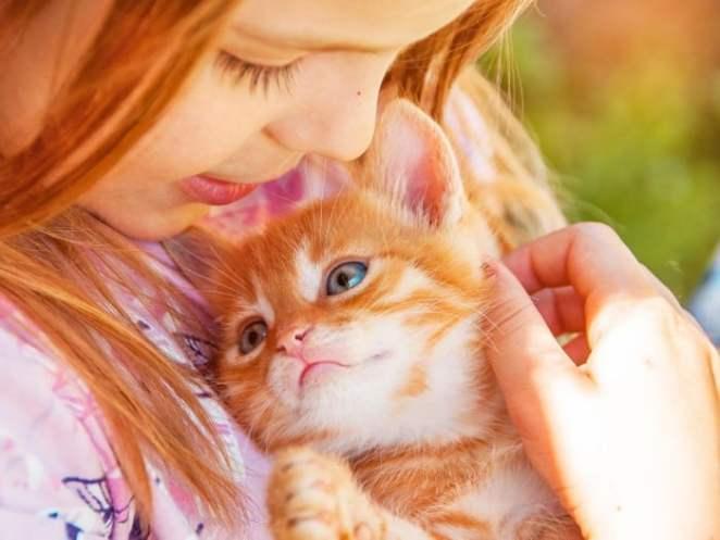 los gatos y el autismo