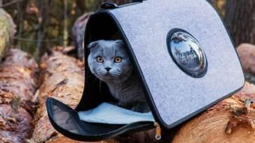 mochilas para llevar de viaje a tu gato