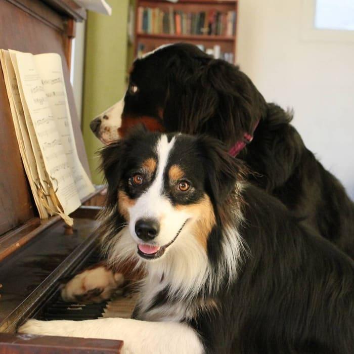 perros más talentosos del mundo