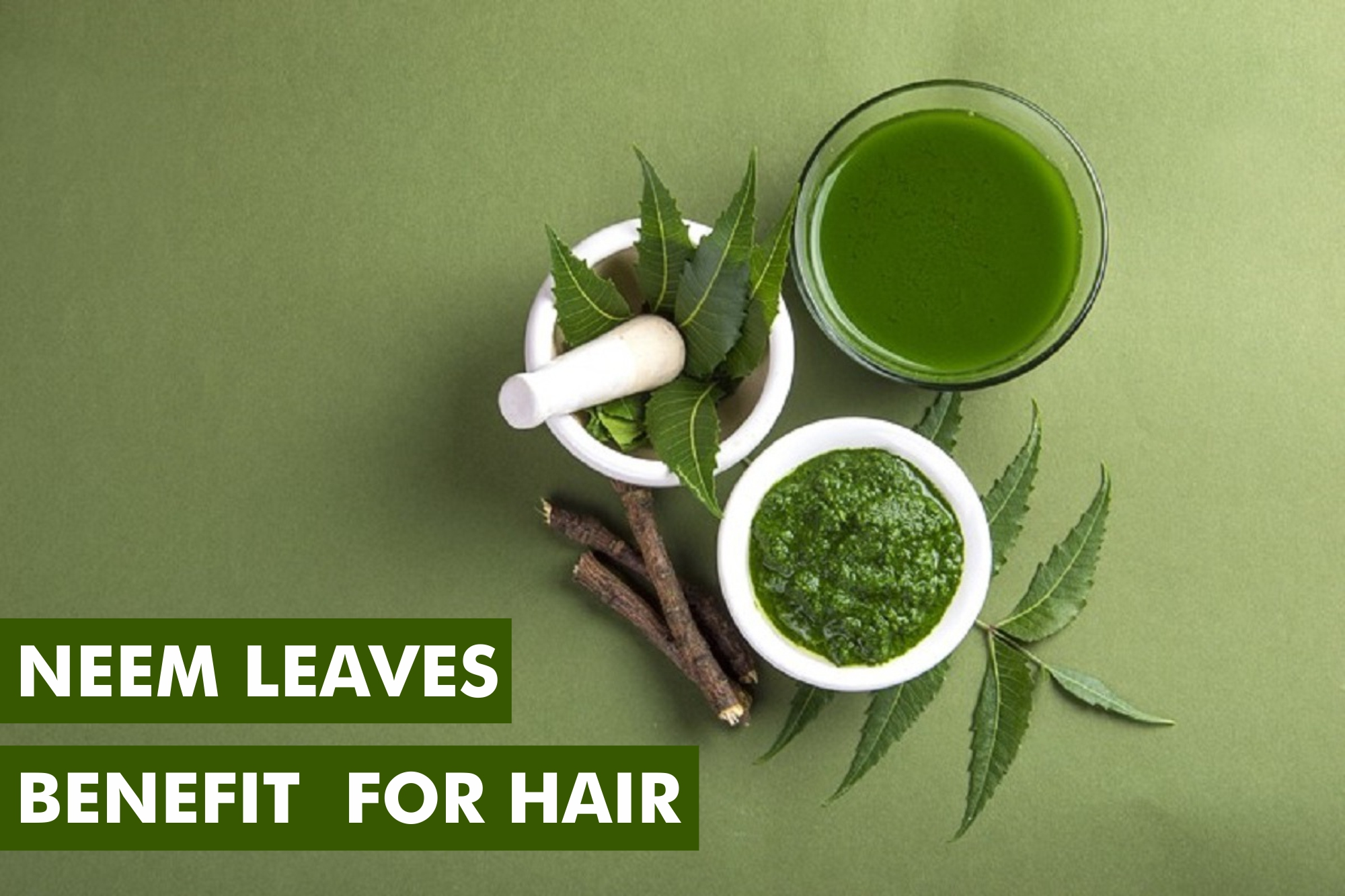How Neem Leaves are Beneficial for Hair? – Girls Glamour