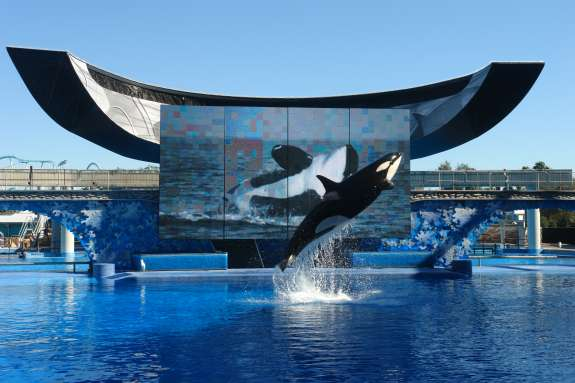 SeaWorld petitioned that its value be assessed at $10 million less than the Orange County Property Appraiser's assessment. Photo: Wikimedia Commons.
