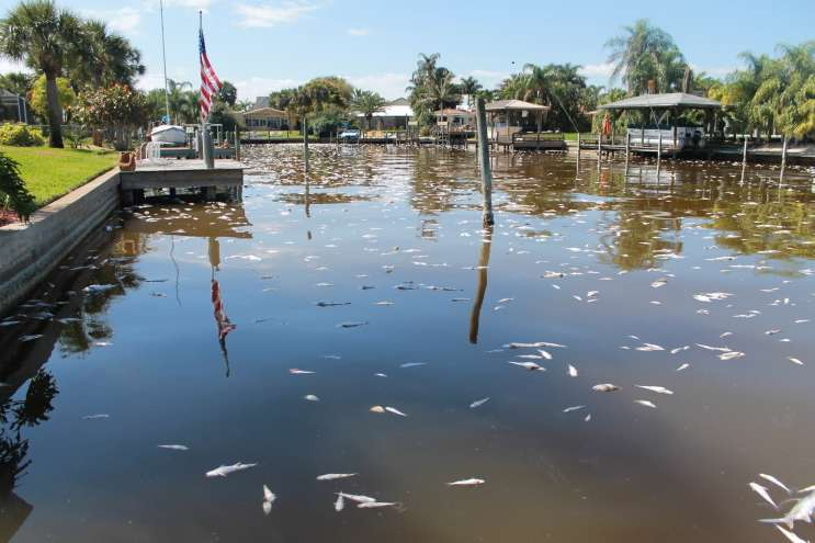 Triathlon To Proceed Weeks After Indian River Lagoon Fish Kill