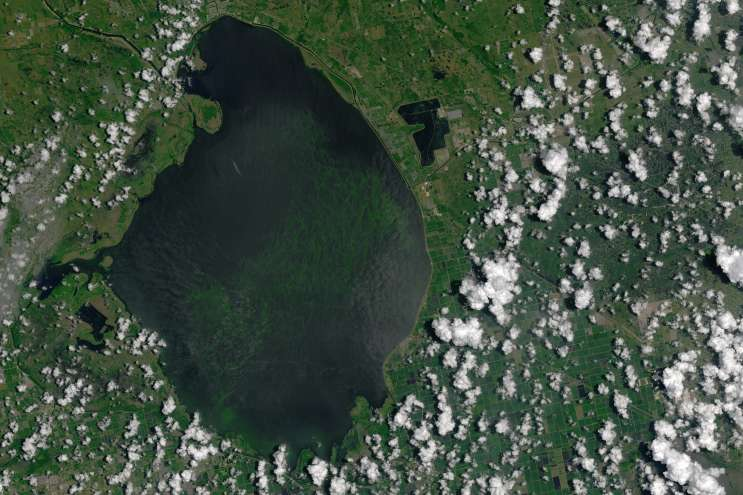 Satellite image of Lake Okeechobee showing the cyanobacteria algae bloom. Image courtesy of NASA
