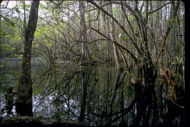 File Photo: Big Cypress National Preserve
