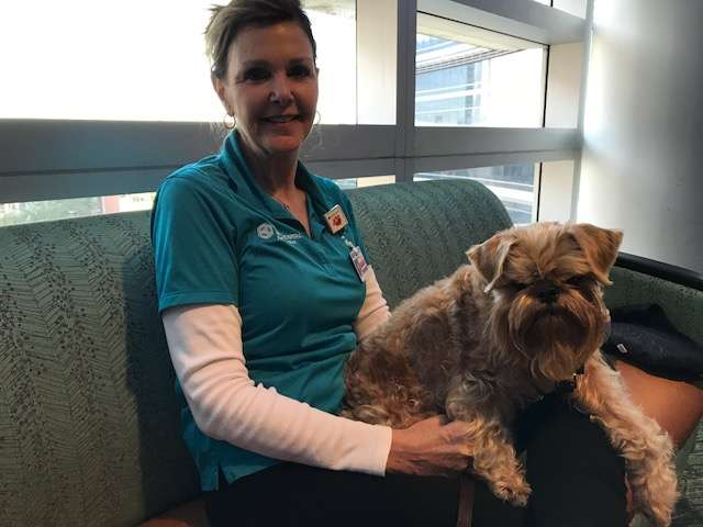 Pets heal at Florida Hospital. Photo: Danielle Prieur