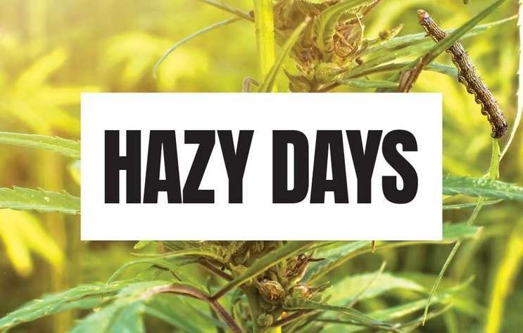 The Federal Farm Bill could make hemp farming legal – but in the