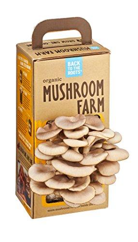 Save Money At The Store! Grow Organic Mushrooms At Home