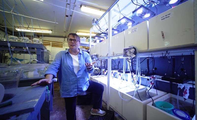 Ruth Gates in a lab at the Hawaii Institute of Marine Biology (Cory Lum)