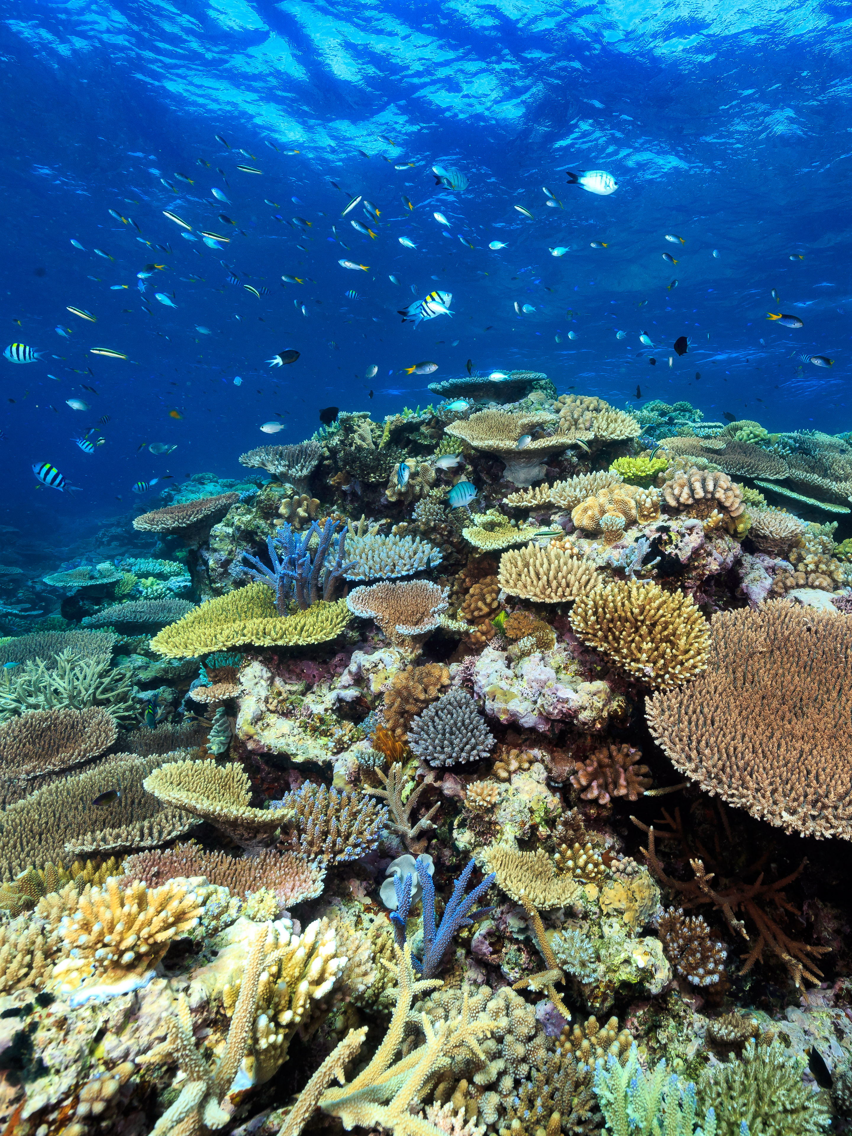 Life And Of The Great Barrier Reef