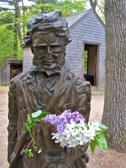 Henry David Thoreau monitored flowering times in Concord from 1852 to 1858; his data is a key component in our study. Photo by Richard Primack and Abe Miller-Rushing.