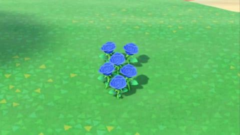 森 バラ あつ 青い
