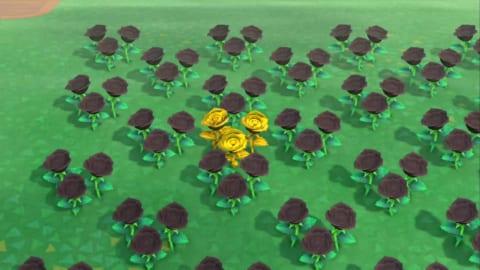 金バラ あつ森