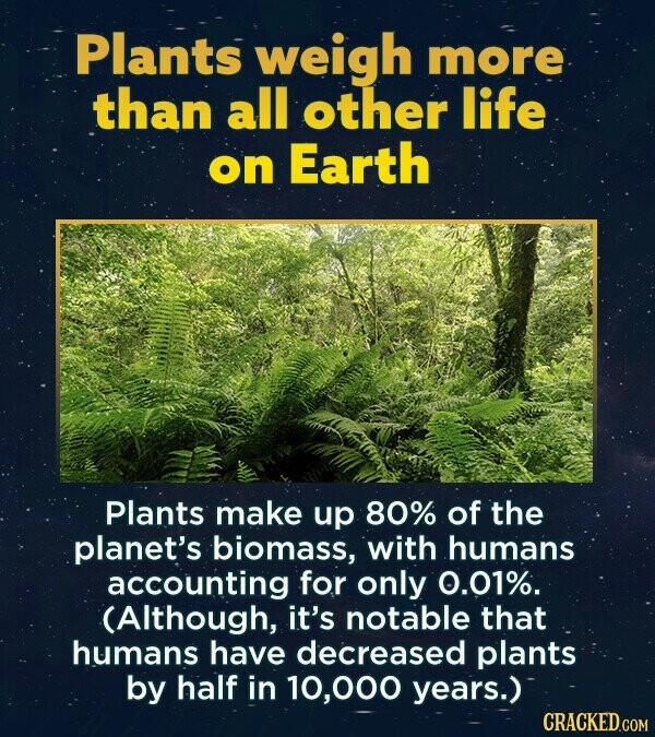 Plants weigh more than all other life on Earth Plants make up 80% of the planet's biomass, with humans accounting for only 0.01%. (Although, it's notable that humans have decreased plants by half in 000 years.) CRACKED.COM