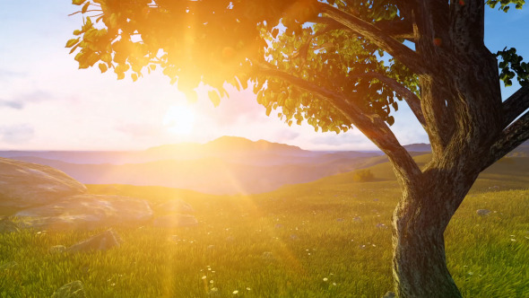 Tree Summer Sunrise by neoapatch | VideoHive