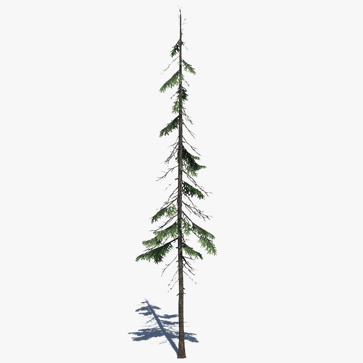 Low Poly Pine Tree Pack By Polyasset3d
