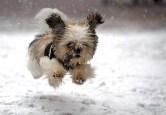 Snow Puppies 1