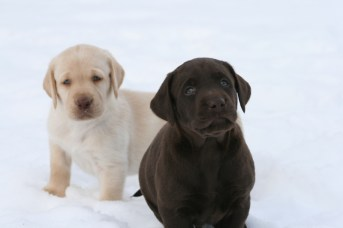 Snow Puppies 4