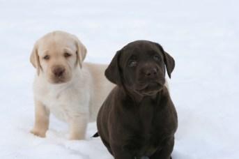 Snow Puppies 4