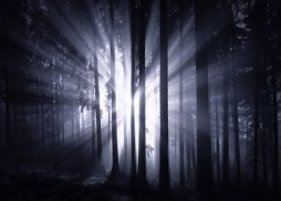 The Dark Forest 1