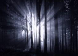 The Dark Forest 1