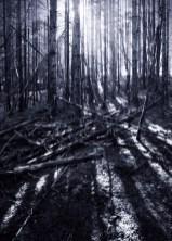 The Dark Forest 8