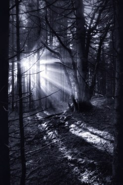 The Dark Forest 9