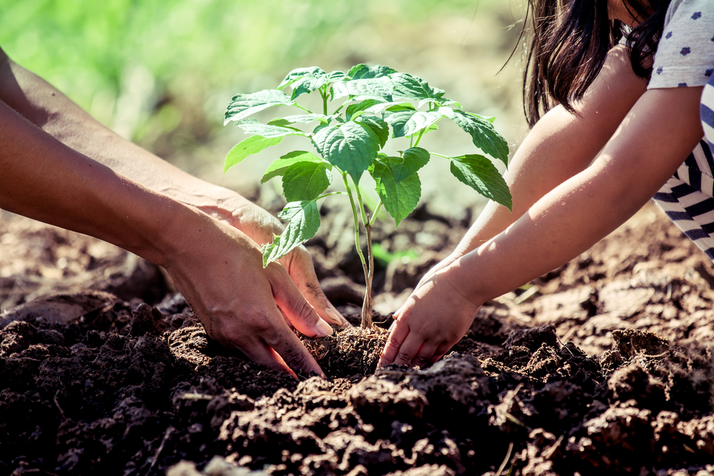 Planting a tree initiative