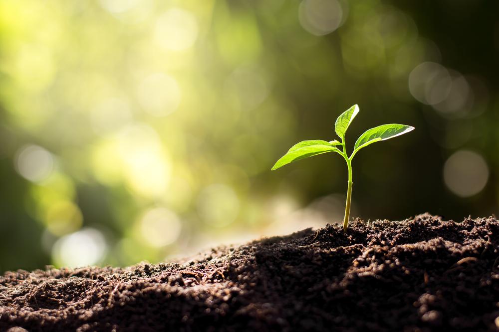 Seedling Growing